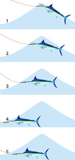 marlin attack