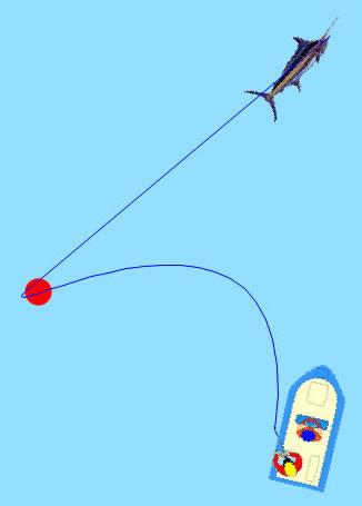fish hookup lines